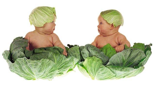<i>Cabbage Kids</i> par la photographe Anne Geddes