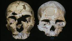 Le crâne d'un Néandertalien (à gauche) et celui d'un homme moderne (à droite)
