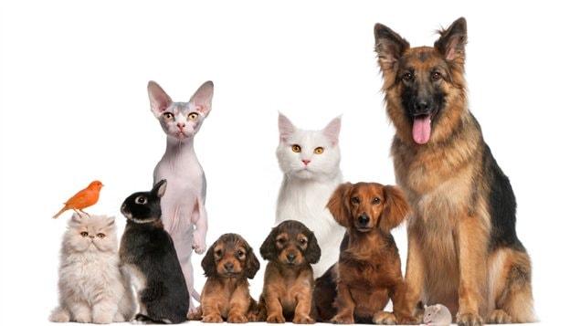 http://img.src.ca/2013/03/19/635x357/130319_n69tn_animaux_chien_chat_sn635.jpg