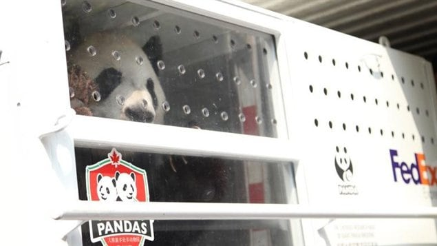 The pandas are viewed as giant step forward in Canada's relationship with China