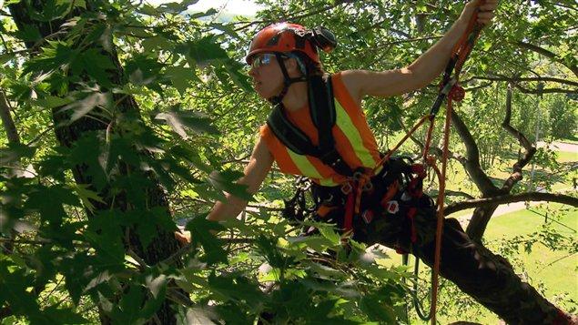 Marilou Dussault a reçu plusieurs distinctions pour ses performances d'élagage, dont celle de la grimpeuse la plus rapide du monde.