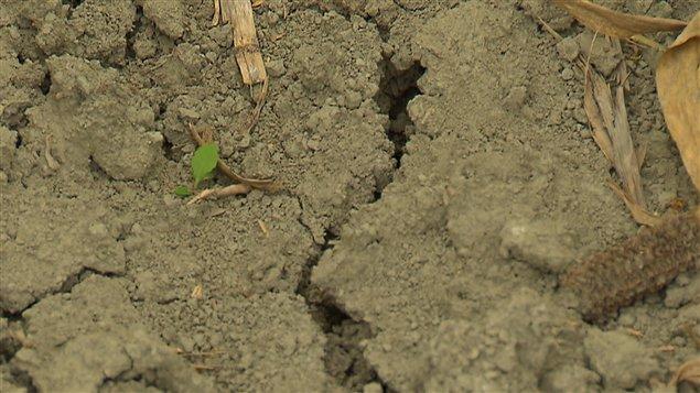 Plusieurs facteurs expliquent l'appauvrissement des sols et la baisse des rendements qui s'ensuit.