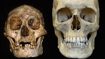 Le cerveau d'un homme de Florès et celui d'un homme moderne.