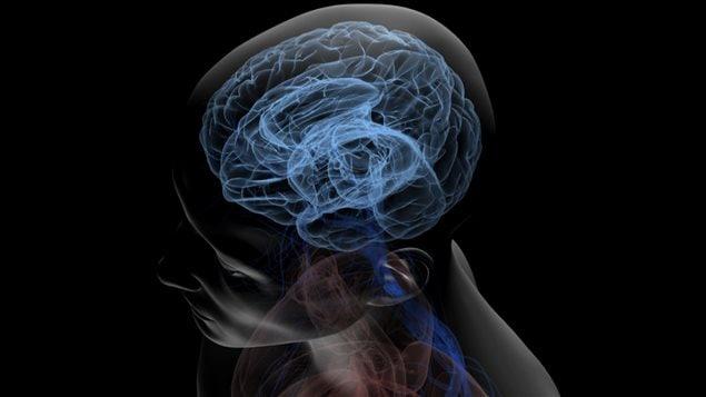 La chimie du cerveau