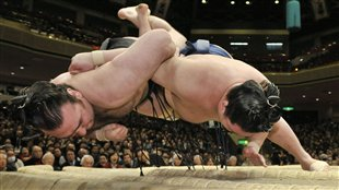 Le sumo