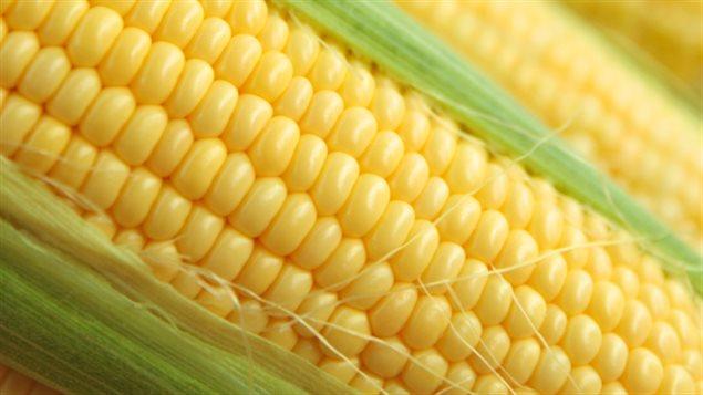 """Тарифная война Трампа продолжает приносить """"плоды"""": ЕС увеличил импорт канадской кукурузы на 85%"""