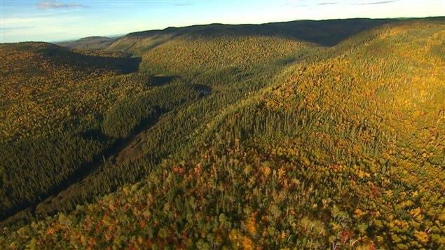 La forêt québécoise représente un cinquième du territoire forestier canadien et deux pour cent des forêts du monde.