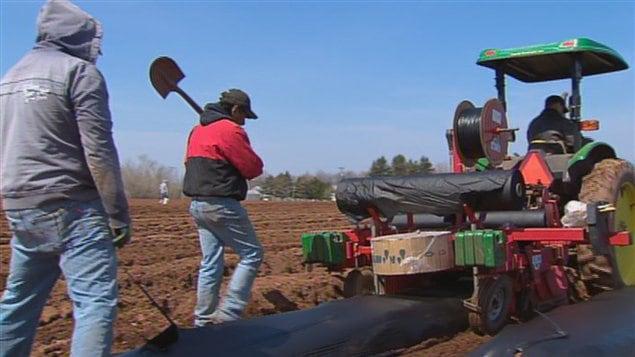 Les entreprises agricoles disent avoir un réel besoin de main d'oeuvre provenant de l'étranger.