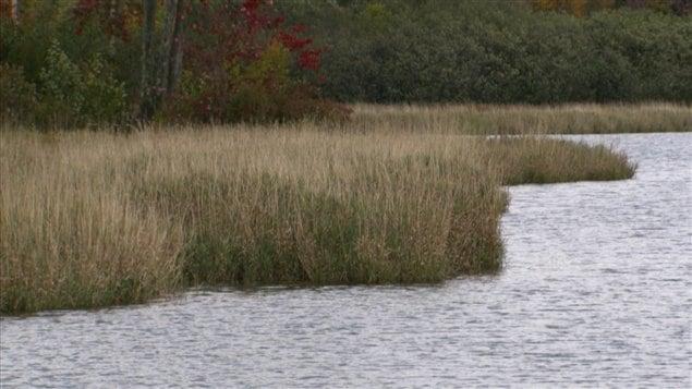 La présence de végétation en bordure des plans d'eau limite leur contamination par le phosphore.