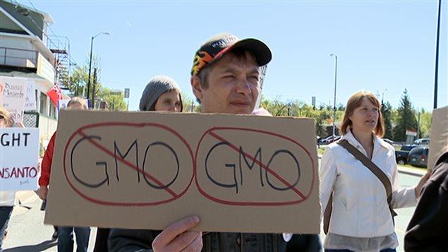 Un manifestant brandit à Toronto récemment un écriteau pour dénoncer l'utilisation des OGM par Monsanto au Canada.