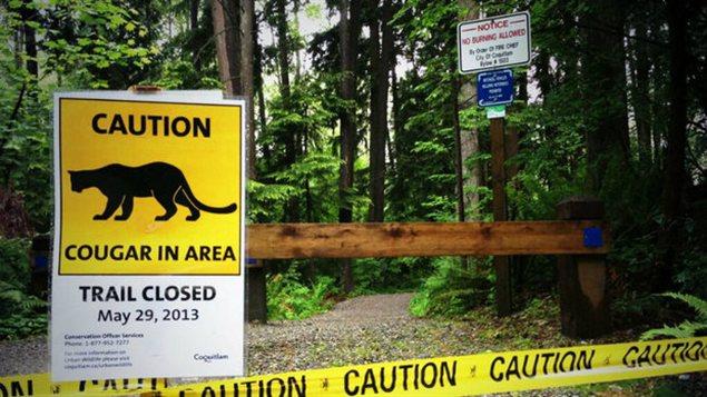 Un panneau de signalisation de cougar à Coquitlam
