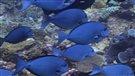 2300 km de trésors sous-marin (2013-08-15)