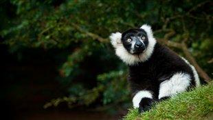 L'île de Madagascar
