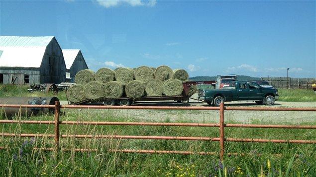 Des ballots de foin à la ferme de Paul Falardeau, au Témiscamingue
