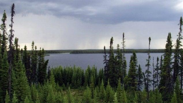 La forêt boréale du Manitoba abrite la sauvagine dont la population atteint de 10 à 12 millions en saison de reproduction, ainsi que plusieurs espèces dont la survie dépend des zones humides, dont le caribou des bois, une espèce menacée. © Canards Illimités Canada