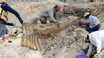 Des paléontologues travaillent autour des fossiles.