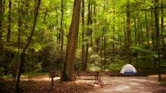 Long séjour en forêt