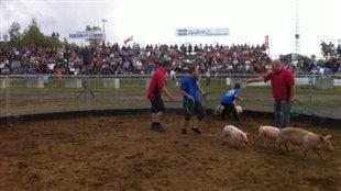 La course aux cochons pour enfants au Festival du cochon à Sainte-Perpétue