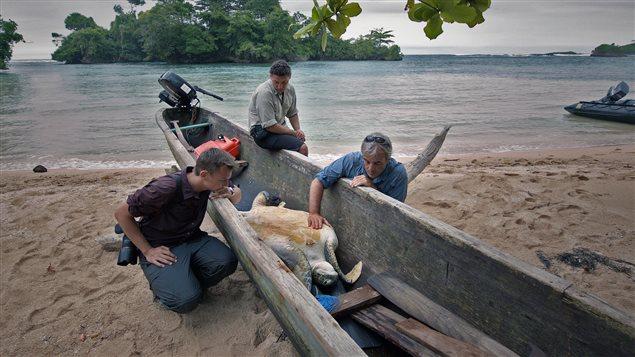 L'équipage du Sedna IV s'intéresse à des voleurs de tortues.