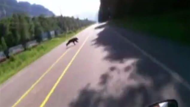 Un motocycliste sur le point de heurter un ours sur une route de la Colombie-Britannique.