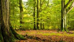 Les rôles des arbres en ville sont nombreux : écologique, esthétique, économique et même thérapeutique!