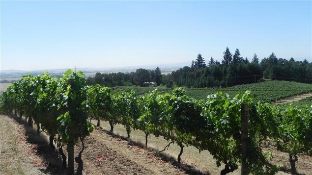 Un vignoble de la Willamette valley en Oregon.