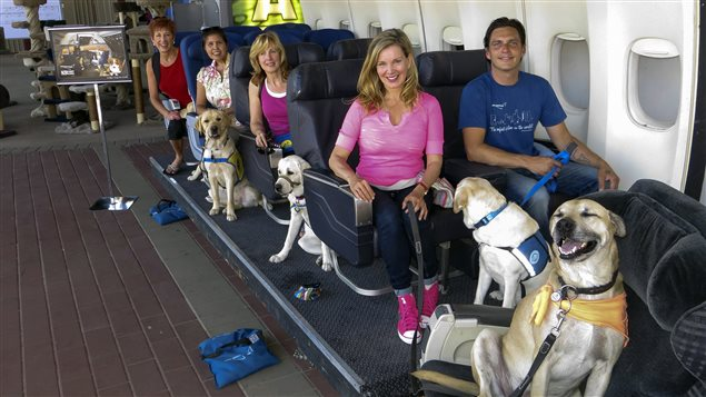 Un studio d'Hollywood apprend aux chiens à bien se comporter en avion.