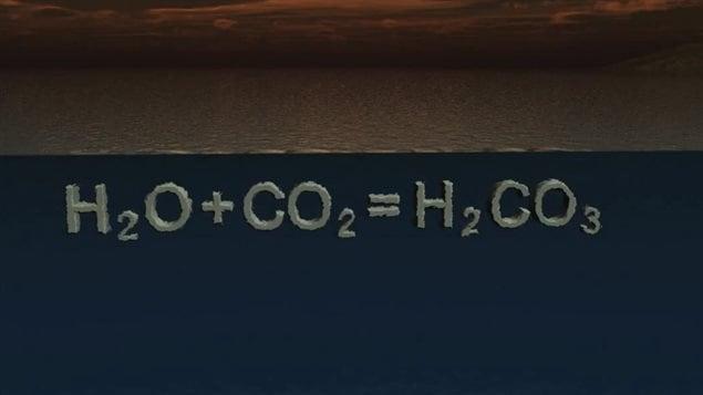L'acidification des océans