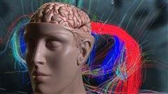 Image tirée du reportage de Michel Rochon sur le Connectome humain. TJ22H mardi 1er octobre 2013.