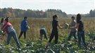 Des jeunes contribuent à garnir les banques alimentaires