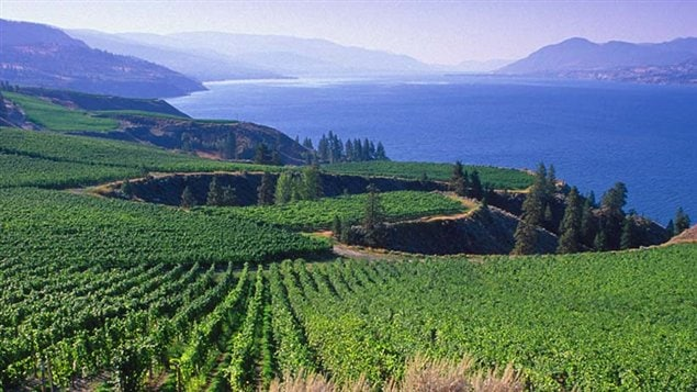 View of Mission Hill vineyard in the Okanagan Valley BC