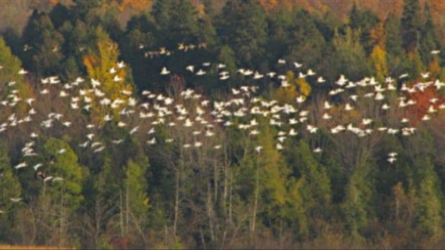Le changement climatique menace gravement les espèces d'oiseaux