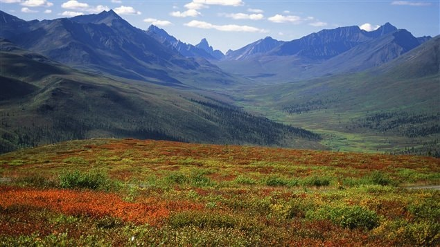 Forêt boréale au Yukon.