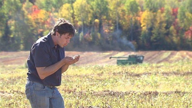 Le cultivateur Simon Duval-Matte dans un champ de sarrasin andainé de Ferme-Neuve.