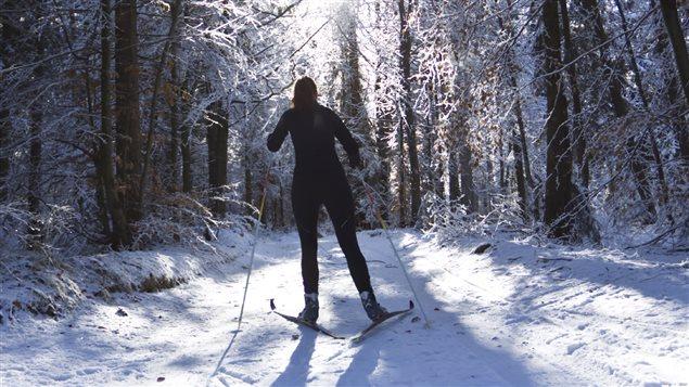 Ski de fond en forêt