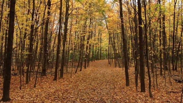 Le parc du Mont-Saint-Bruno