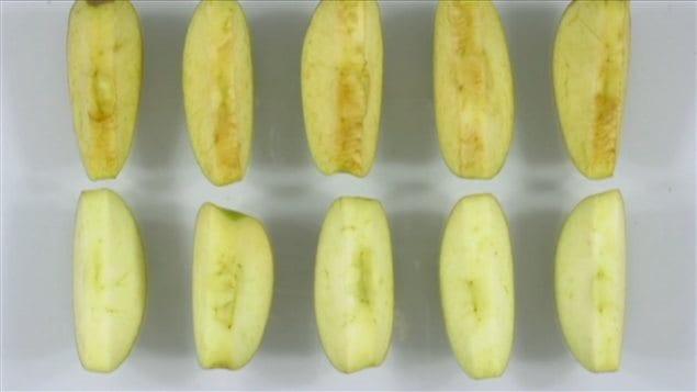 Une fois coupée, la pomme Artic ne brunit pas.