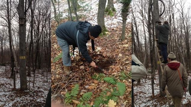 Trouver des truffes grâce à des écureuils
