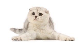Les comportements rigolos des chats