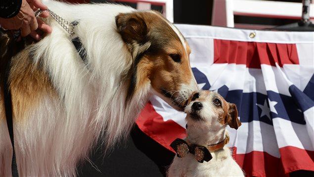 Uggie, le chien en vedette dans le film <i>The Artist</i>, reçoit un baiser de Lassie (L), une descendante de la chienne Lassie qui a été en vedette dans la série homonyme.
