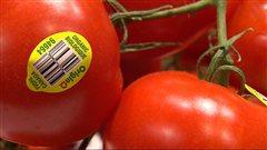 Des tomates biologiques