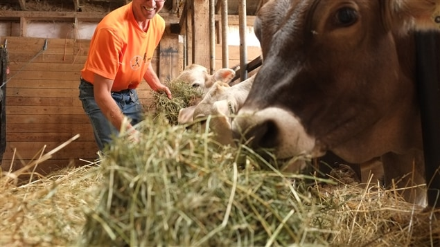 Un élevage de bovins
