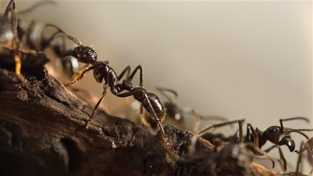 Des fourmis