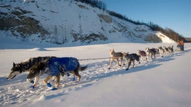 Teh gruelling Yukon Quest race travels 1600km, and officials are hoping for colder weather