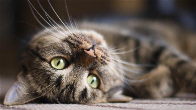 chat en date Oosterhout
