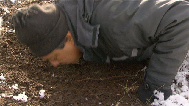 Le mycologue Efrén Cázares met son odorat à contribution sur un sol susceptible de contenir des truffes québécoises.