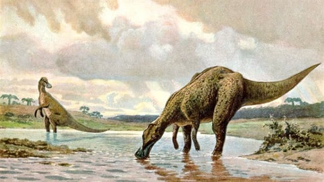 Hadrosaures
