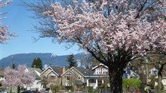 Vancouver en fleurs!