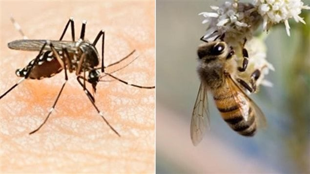 Un moustique et une abeille