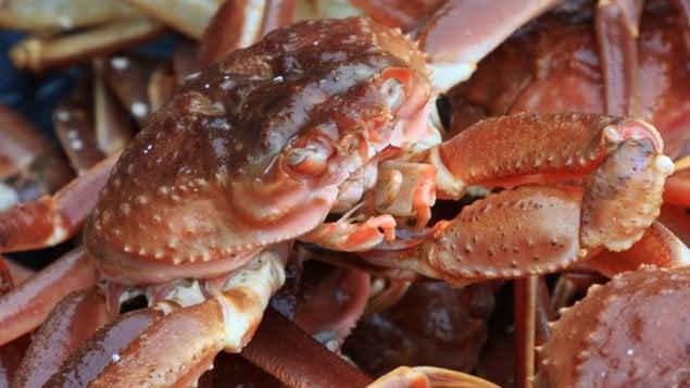Crabes des neiges